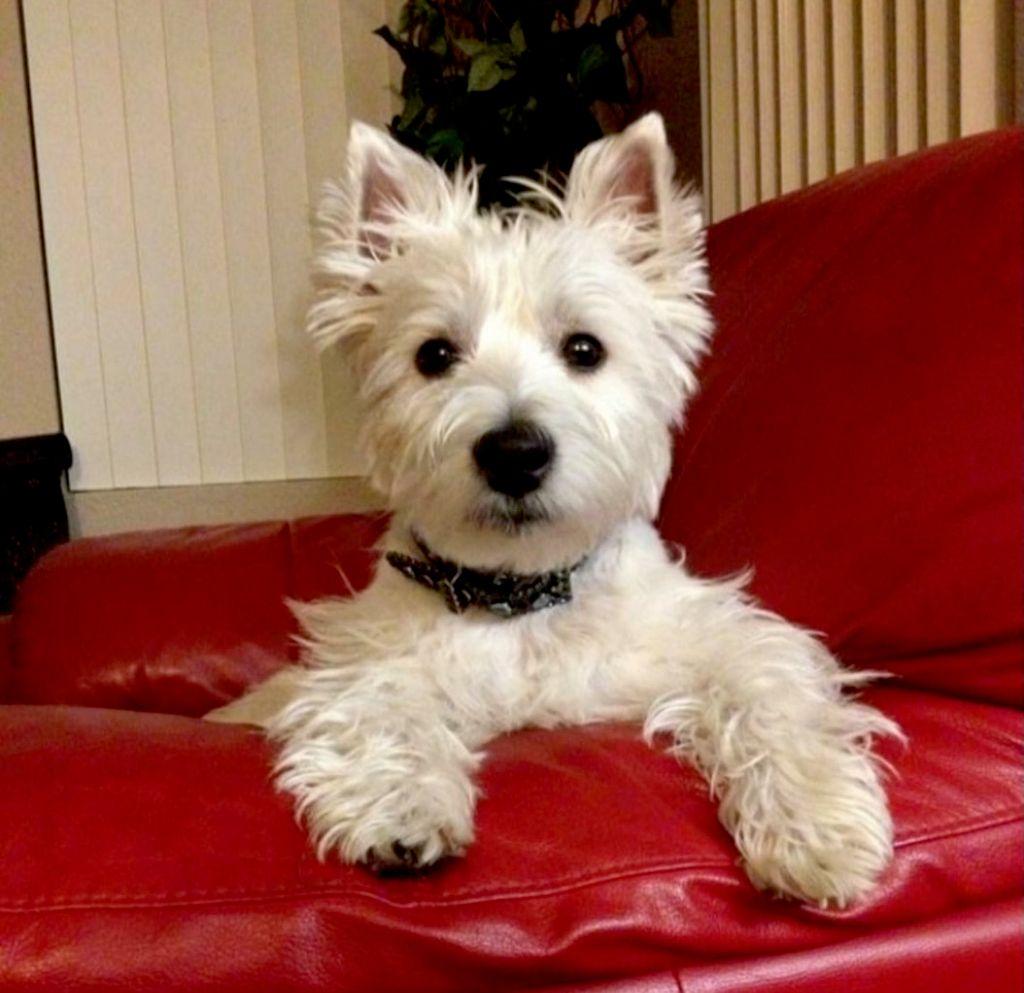 Nicole's Dog Sitting