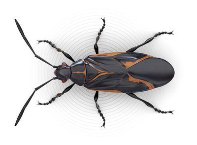 Avatar for JML Pest Control Services