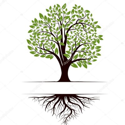 Avatar for T & S TREE CARE LLC
