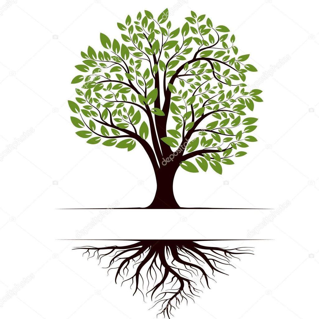 T & S TREE CARE LLC