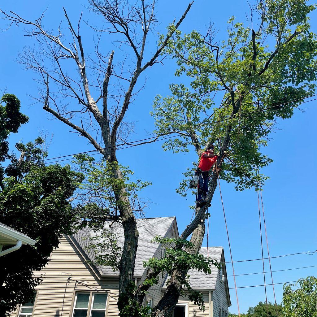 Dani tree service