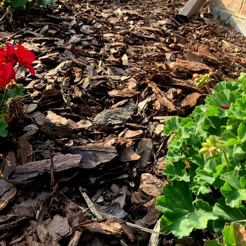 Pine wood mulch!!!  Giving this garden an artistic pop! with vibrant colors accenting from the beautiful flowers