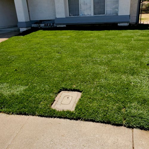 installed the new sod