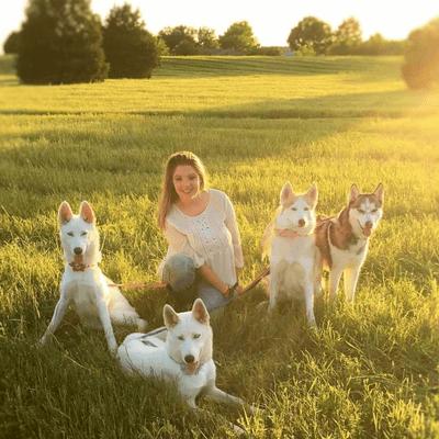 Avatar for Better Pups Dog Training