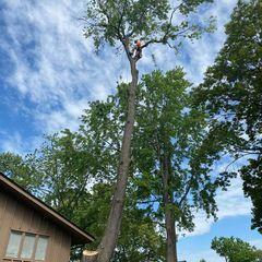 Mos tree service