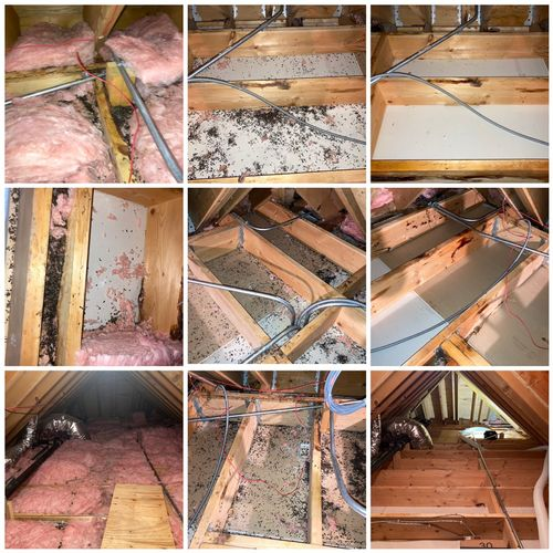 Squirrel infestation to attic: Insulation, waste/feces removed and sanitized before blown in pest treated insulation