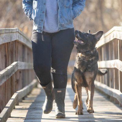 Avatar for Fetch Happens Dog Training