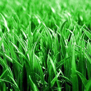 Avatar for Spray Lawn Hydroseeding