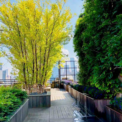 Rooftop garden installations and maintenance