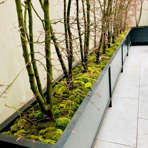 Moss Installation at The Gagosian Art Gallery of New York