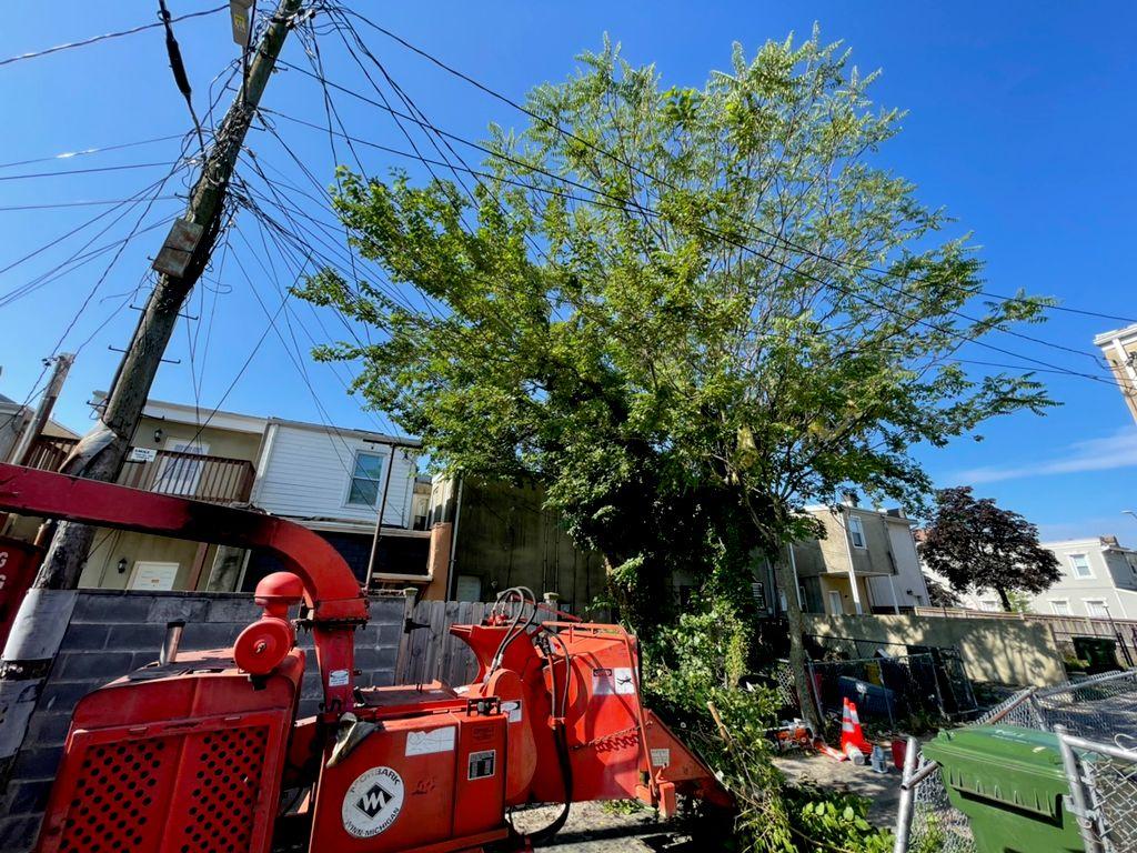 Edwin's Tree Service