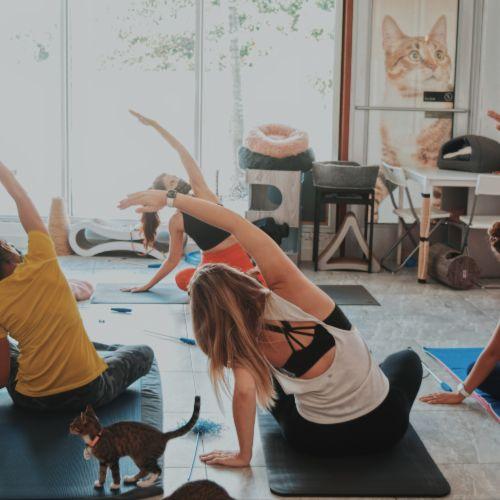 Take Paws-Yoga at The Cat's Meow Cafe-Miami, FL