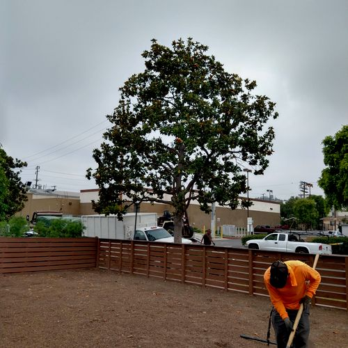 tree thinned out and removal of dead wood