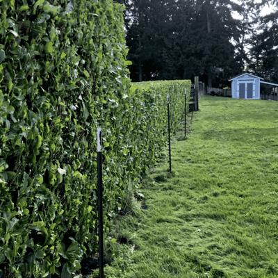 Avatar for Nicho's strait edge hedge and tree work