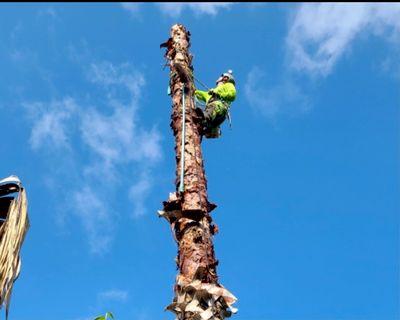 Avatar for Joe's Tree Removals