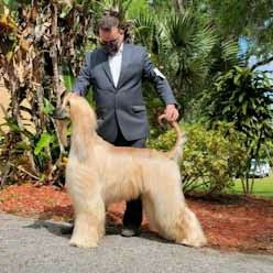 Avatar for ALFONSO PET GROOMING.best quality in the County