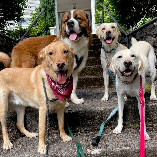 Zeus, Rocky, Nova, & Buddy in Goode Hollow