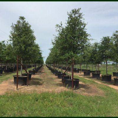 Avatar for García Trees X Sales