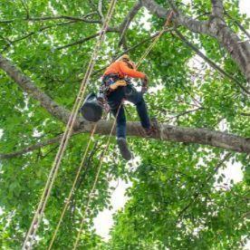lady maria  tree services