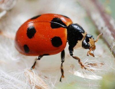 Avatar for BugXter Pest Services