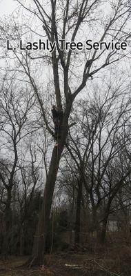 Avatar for L. Lashly Tree Service