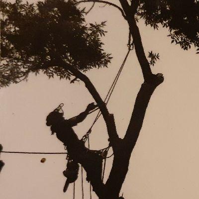 Avatar for MOLINA TREE SERVICES
