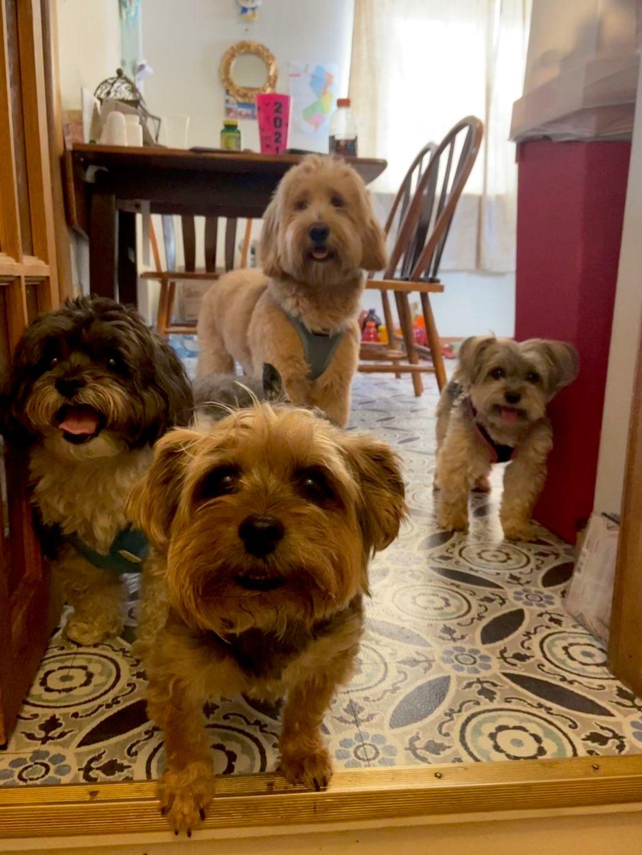 Blury's Dog Care Service