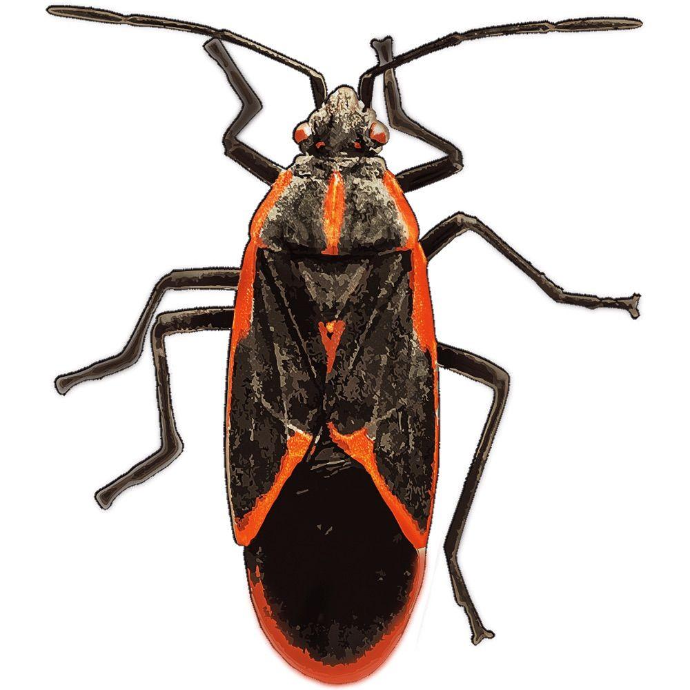 BugXter Pest Services