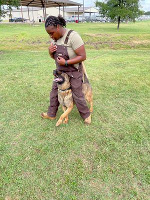 Avatar for Shae's dog training