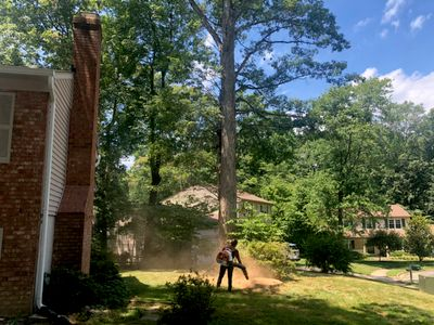 Avatar for Big trees landscaping & tree service LLC