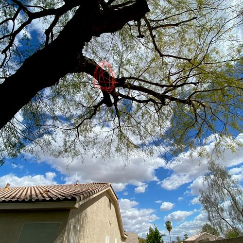 Limb removal for house clearance