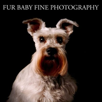 Avatar for Fur Baby Fine Photography