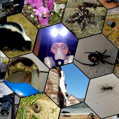 Avatar for Bee Smart Pest Control LLC