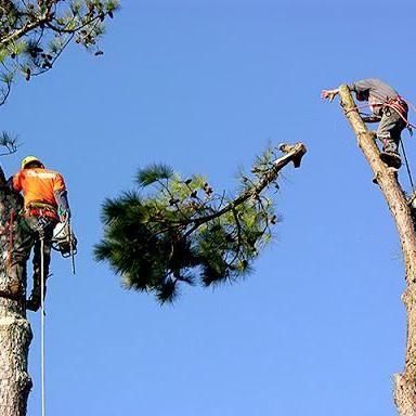 Tree Pros Greenville
