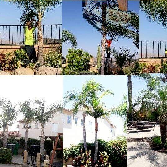 M&E Tree Management & Lawn services