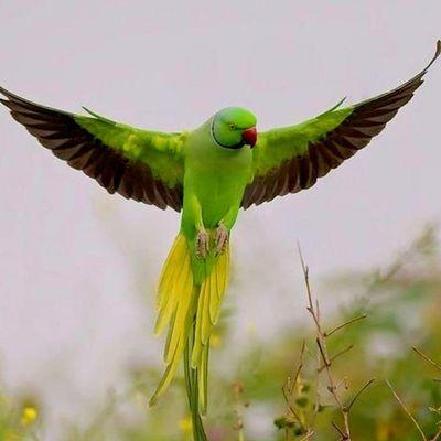 Avatar for Green World Logo & Graphics Expert