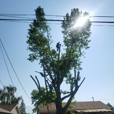 Avatar for C&C Tree Service