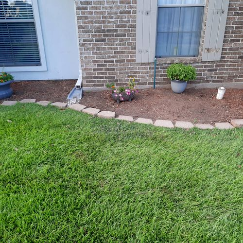 after removing shrubs