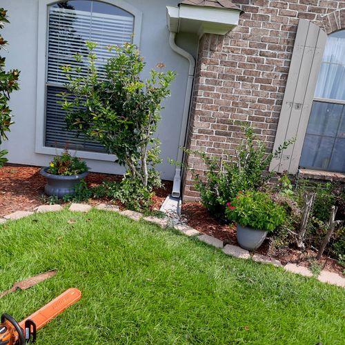 Before removing shrubs