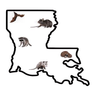 Avatar for Louisiana Wildlife Solutions
