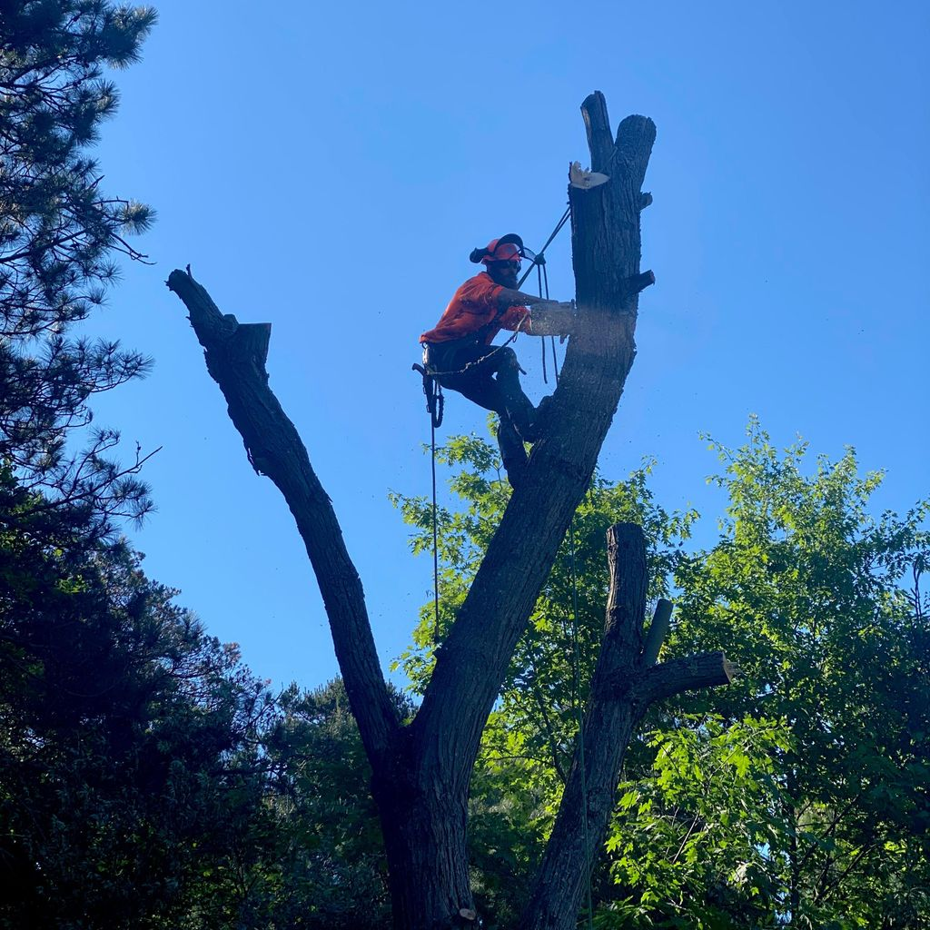 Stuckey & Son's Tree Service LLC