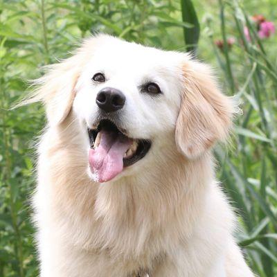 Avatar for Barkology Dog Training