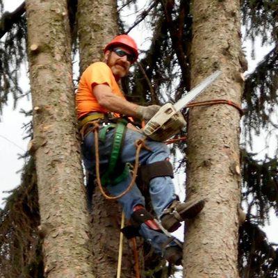 Avatar for All Seasons Tree Service