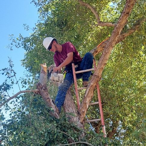 Copa boys Trees and Debris!