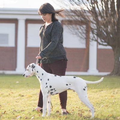 Avatar for Little Hope Dog Training