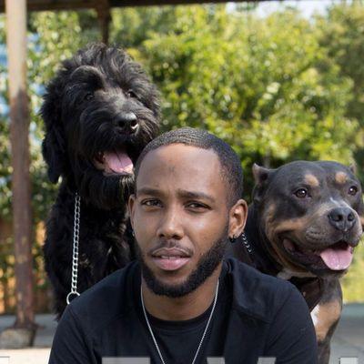 Avatar for Black Crown Premier Dog Services