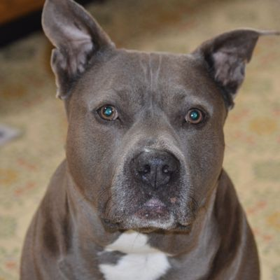 Avatar for The Pitbull Face Photography