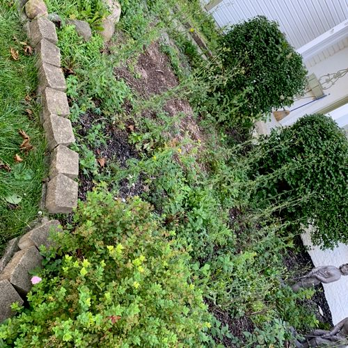 Before weeding and fabric.