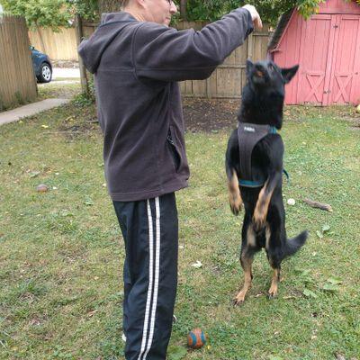 Avatar for ElliottGhost Dog Training