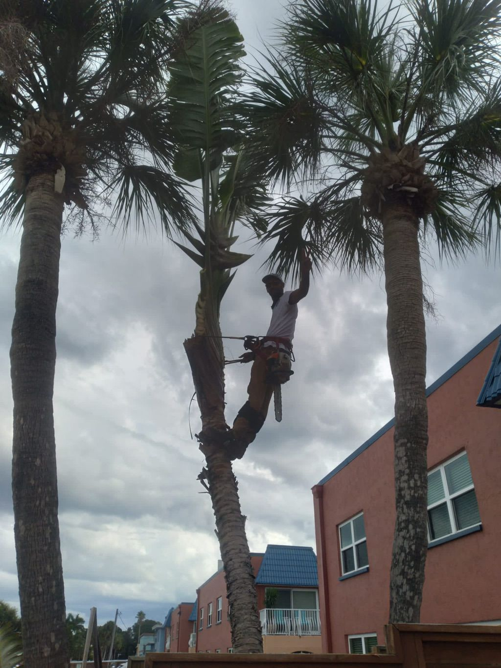 Safety first tree services Inc.